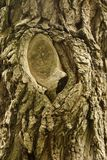Tiro do macro da textura do tronco de árvore Foto de Stock