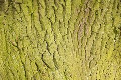 Tiro do macro da textura do tronco de árvore Imagens de Stock