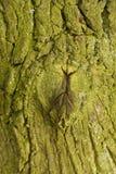 Tiro do macro da textura do tronco de árvore Fotografia de Stock