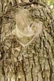 Tiro do macro da textura do tronco de árvore Fotos de Stock