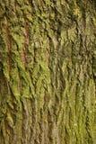 Tiro do macro da textura do tronco de árvore Imagem de Stock