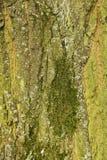 Tiro do macro da textura do tronco de árvore Imagens de Stock Royalty Free