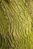 Tiro do macro da textura do tronco de árvore Imagem de Stock Royalty Free