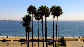 Tiro emblemático de California meridional que ofrece las palmeras que se sacuden en el mar almacen de metraje de vídeo