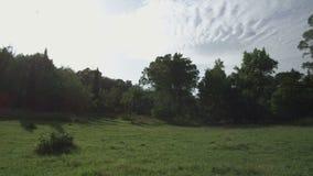 Tiro estático das árvores filme