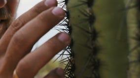 Tiro estupendo del primer del hombre turístico joven barbudo que toca agujas del cactus del Saguaro con la mano en el parque naci almacen de video