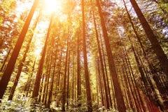 Tiro granangular profundamente en el más forrest de algunos árboles Foto de archivo libre de regalías