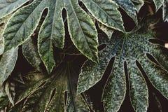 Tiro hermoso de hojas tropicales ex?ticas foto de archivo
