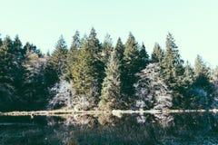 Tiro hermoso de un árbol del lago y de pino más forrest del fondo imagenes de archivo
