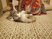 Tiro hermoso de un gato blanco lindo del bebé que duerme en una cama fotos de archivo