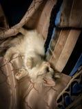 Tiro hermoso de un gato colorido lindo del bebé que miente en el coche fotografía de archivo