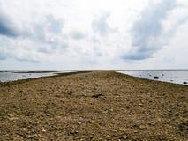 Tiro impressionante dos fragmentos corais inoperantes que encontram-se em uma praia no re Foto de Stock