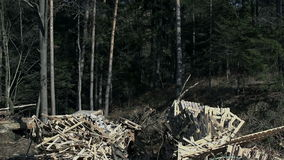 Tiro inclinable de una pila de madera metrajes