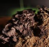 Tiro incomum do fungo de Thelephora com luz do lado e do gleam verde fotografia de stock
