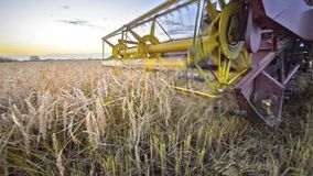 Tiro largo da colheita do outono da liga video estoque