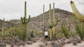 Tiro largo do movimento lento do homem feliz novo do turista que aponta a mão no cacto gigante do Saguaro no deserto do parque na video estoque