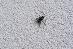 Tiro macro da mosca Foto de Stock Royalty Free