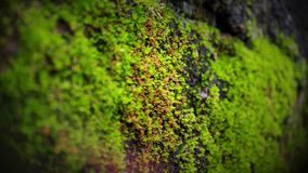 Tiro macro das algas em uma parede de tijolo imagem de stock royalty free