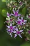 Tiro macro das flores Foto de Stock Royalty Free