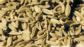 Tiro macro das sementes de cominhos video estoque