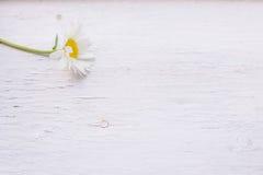 Tiro macro de camomiles salvajes en un fondo de madera blanco Fotografía de archivo libre de regalías