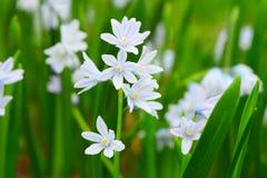 Tiro macro de flores blancas min?sculas fotos de archivo libres de regalías