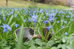 Tiro macro de flores p?rpuras min?sculas foto de archivo