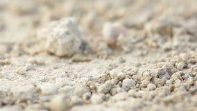 Tiro macro de hormigas almacen de metraje de vídeo