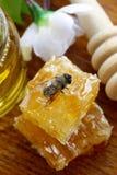 Tiro macro de la abeja de la miel en un panal Fotografía de archivo libre de regalías