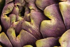 Tiro macro de la alcachofa púrpura con la luz natural Imagen de archivo libre de regalías