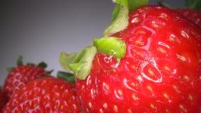 Tiro macro de la fresa jugosa roja en fondo oscuro Fondo cosechado dulce de la baya, forma de vida sana de la comida metrajes