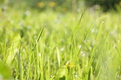 Tiro macro de la hierba verde Imagen de archivo libre de regalías