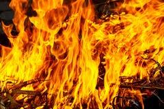 Tiro macro de la hoguera, del carbón blanco del humo, calientes, el brillar intensamente y del fuego Ramas y madera ardientes Foto de archivo libre de regalías