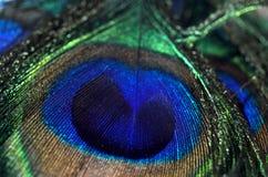 Tiro de la macro de la pluma del pavo real Fotos de archivo