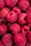 Tiro macro de las frambuesas maduras frescas, fondo de la fruta del verano Fotos de archivo libres de regalías