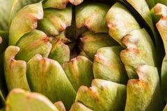 Tiro macro de los pétalos frescos de la alcachofa con la luz natural Fotografía de archivo
