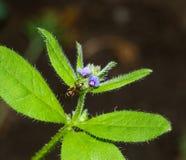 Tiro macro de una flor con la hormiga Imágenes de archivo libres de regalías