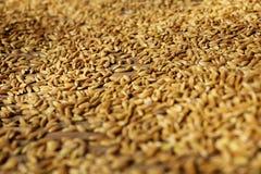 Tiro macro do arroz imagem de stock royalty free