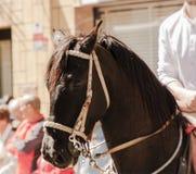Tiro macro do cavalo marrom marrom animal no partido local imagem de stock
