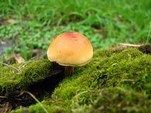 Tiro macro do cogumelo no parque fotografia de stock
