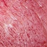 Tiro macro do fundo da carne Foto de Stock