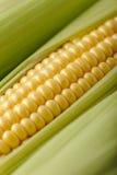 Tiro macro do milho Foto de Stock