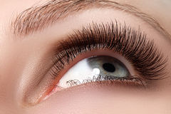 Tiro macro do olho bonito da mulher com as pestanas extremamente longas Fotografia de Stock