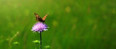 Tiro macro en mariposa y la flor Foto de archivo libre de regalías