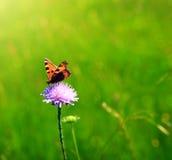 Tiro macro en mariposa y la flor Fotos de archivo libres de regalías