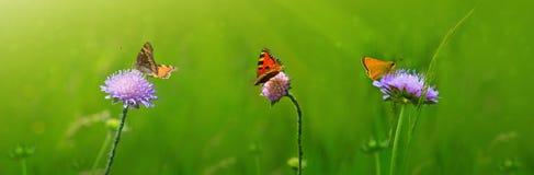 Tiro macro en tres mariposas y flores Foto de archivo