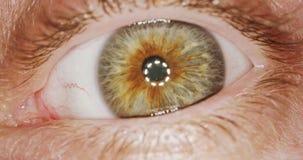 Tiro macro extremo de um olho humano marrom vídeos de arquivo