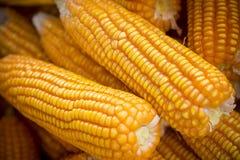 Tiro macro próximo da colheita de Maizebhutta, Thakurgaon, Bangladesh Imagens de Stock