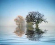 Tiro maravilloso de la naturaleza Fotografía de archivo libre de regalías