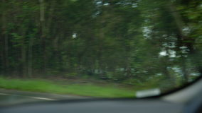 Tiro medio de árboles en la carretera almacen de metraje de vídeo